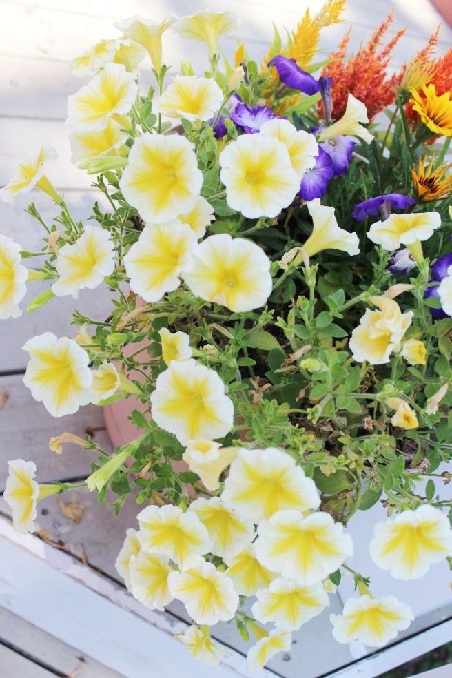 wisconsin flowers